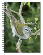 Tennessee Warbler Spiral Notebook