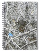 The Blue Stallion Spiral Notebook