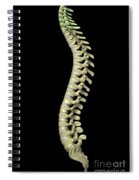 The Cervical Vertebrae Spiral Notebook