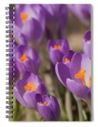 The Crocus Flowers Spiral Notebook
