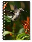 The Hummingbird Hover  Spiral Notebook