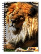 The King Lazy Boy At The Buffalo Zoo Spiral Notebook