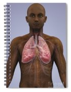 The Lungs And Cardiovascular System Spiral Notebook