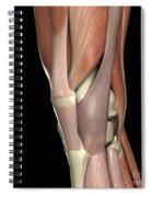 The Muscles Of The Knee Spiral Notebook
