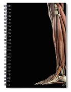The Muscles Of The Lower Leg Spiral Notebook