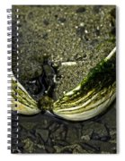 The Shell Spiral Notebook