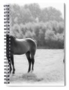The Stallion Spiral Notebook