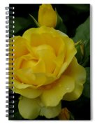 Yellow  Rose Of Summer Spiral Notebook