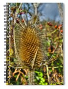 Thistle On Sunny Autumn Day Spiral Notebook