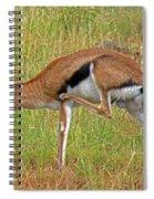 Thomson's Gazelle Spiral Notebook