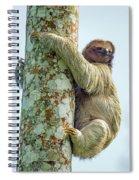 Three-toed Sloth Bradypus Tridactylus Spiral Notebook