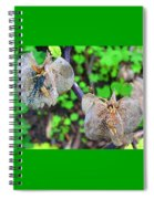 Trapped Fairies Spiral Notebook