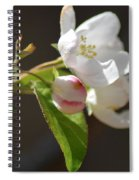 Tree Blossoms Spiral Notebook