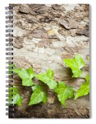 Tree Vine Spiral Notebook