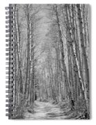 Trees Along A Road, Log Cabin Gold Spiral Notebook