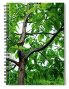 Trees In A Park, Adams Park, Wheaton Spiral Notebook