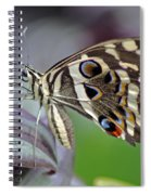 Tropical Butterfly Spiral Notebook