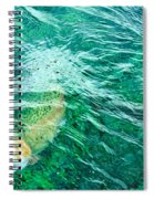 Catching Flies Spiral Notebook