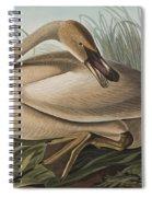 Trumpeter Swan Spiral Notebook