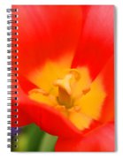 Tulips At Thanksgiving Point - 28 Spiral Notebook