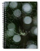 Venusta Orchard Spider Spiral Notebook