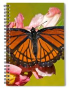 Viceroy Butterfly Spiral Notebook