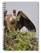 Vultures With Full Crops Spiral Notebook
