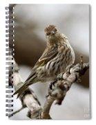 Watchful Eye Spiral Notebook