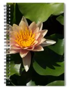 Exotic Colors - A Soft Coral Waterlily Spiral Notebook