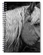 Western Horse In Alberta Canada Spiral Notebook