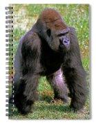 Western Lowland Gorilla Silverback Spiral Notebook
