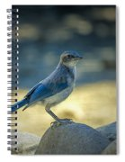 Western Scrub Jay Thief Spiral Notebook