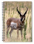 Where The Antelope Play Spiral Notebook