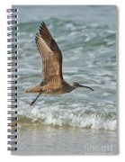 Whimbrel In Flight Spiral Notebook