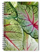 White And Pink Spiral Notebook