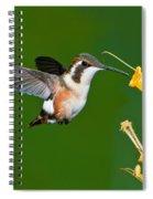 White-bellied Woodstar Spiral Notebook