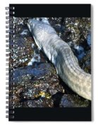White Moray Eel Spiral Notebook