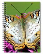 White Peacock Butterfly Anartia Spiral Notebook