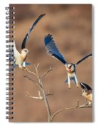 White-tailed Kite Siblings Spiral Notebook