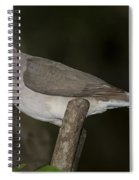 White-tipped Dove Spiral Notebook