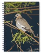 White-winged Dove Spiral Notebook