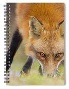 Wild Eyes Spiral Notebook