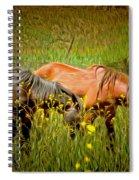 Wild Horses In California Series 2 Spiral Notebook