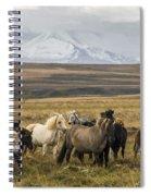 Wild Icelandic Horses Spiral Notebook
