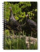 Wild Turkey Meleagris Gallopavo Spiral Notebook