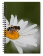 Wildflower Named Oxeye Daisy Spiral Notebook