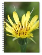 Wildflower Named Yellow Salsify Spiral Notebook