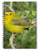 Wilsons Warbler Spiral Notebook