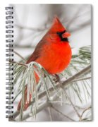 Winter Cardinal Spiral Notebook