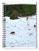 Winter Grazing Spiral Notebook